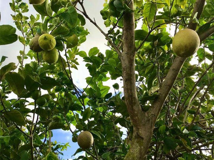 Rental 66-170 Waialua Beach Rd, Haleiwa, HI, 96712. Photo 14 of 18