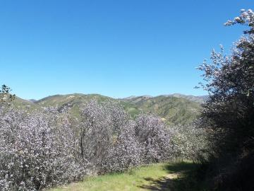 21435 Peroy Ranch Rd, Carmel Valley Village, CA