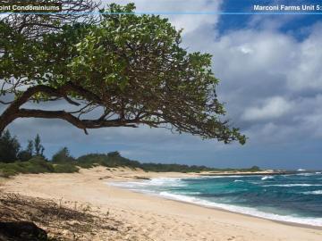 56-1089 Kamehameha Hwy #4/5/6, Kahuku, HI