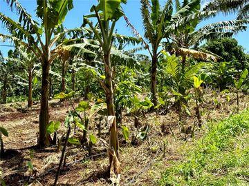 Lot 1 Plantation Rd, Kahuku, HI